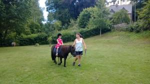 Shetland Pony rides.