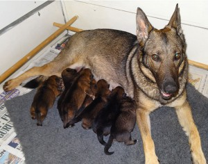 Looking for a name...'C litter'