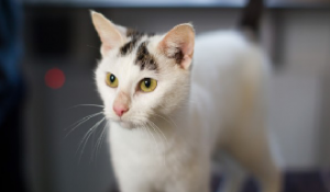 Could you give Minnie a forever home?