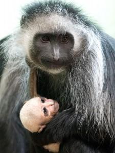 Photo Credit: Paignton Zoo