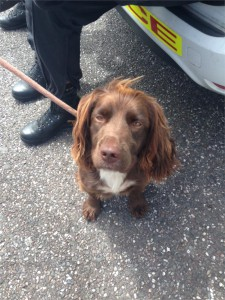 Rolo has been helping officers