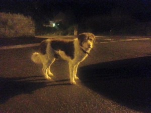 Otto was last seen in Buckfastleigh