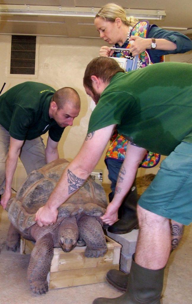 2016-10-pz-tortoise-x-ray-5