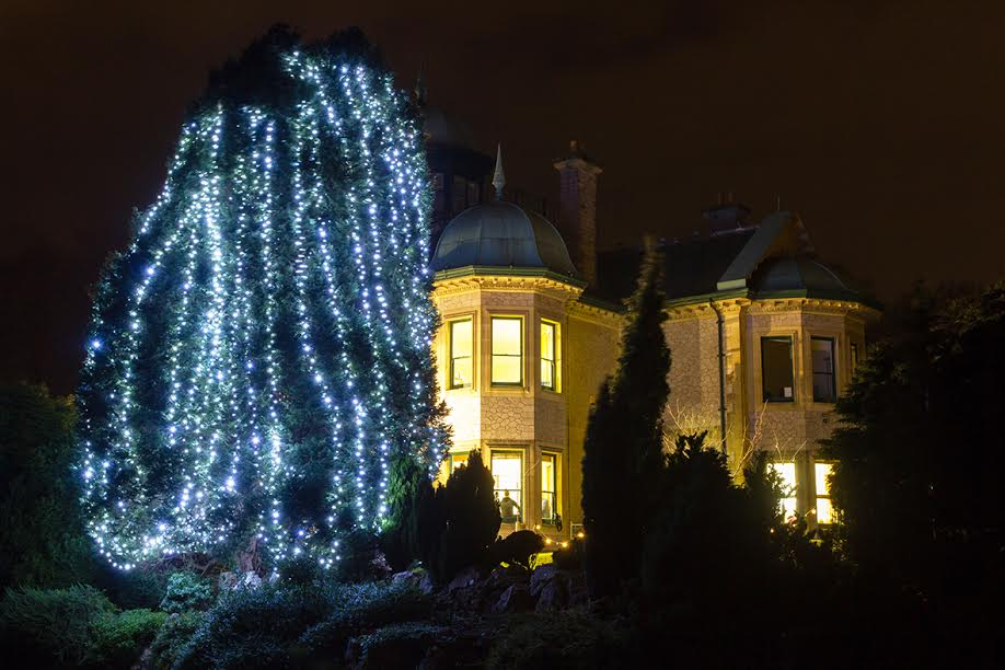Rowcroft's Tree of Light glows in Rowcroft's grounds