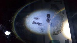 fingerprints-inside-mummy-case