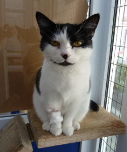 Can you offer Maisie a forever home?