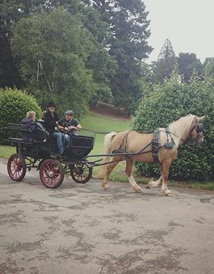 Back at Cockington - horse and carriage rides