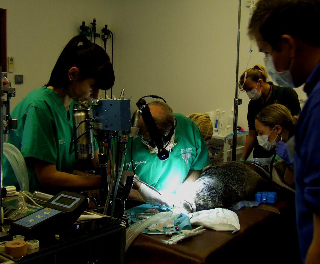 2016-11-lc-seal-dentist-3